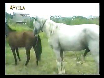 Animal Cigano (part 5)