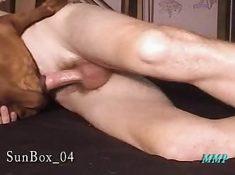 Sunbox 04